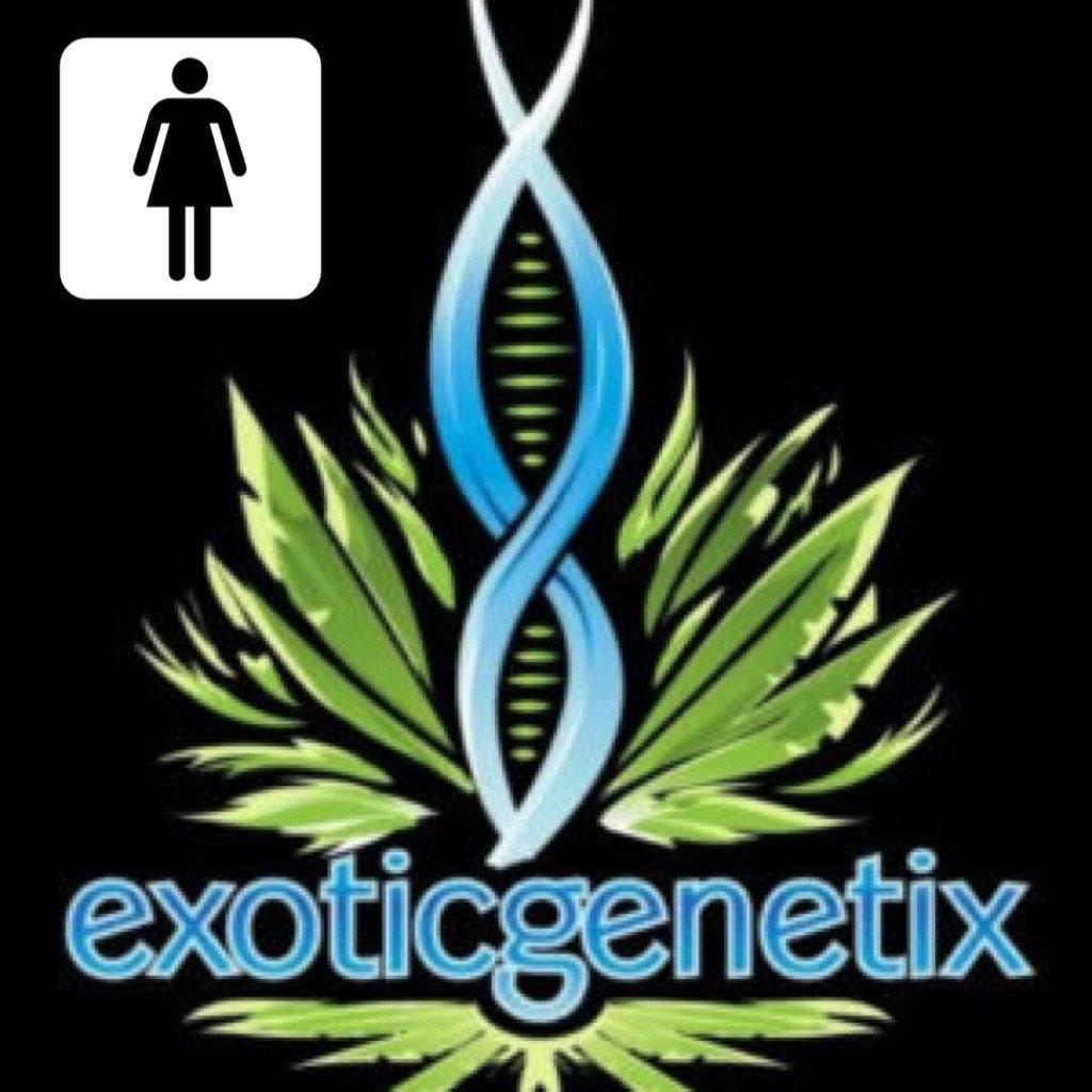 EXOTIC GENETIX FEM LINE